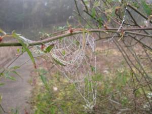霧が付いた蜘蛛の巣